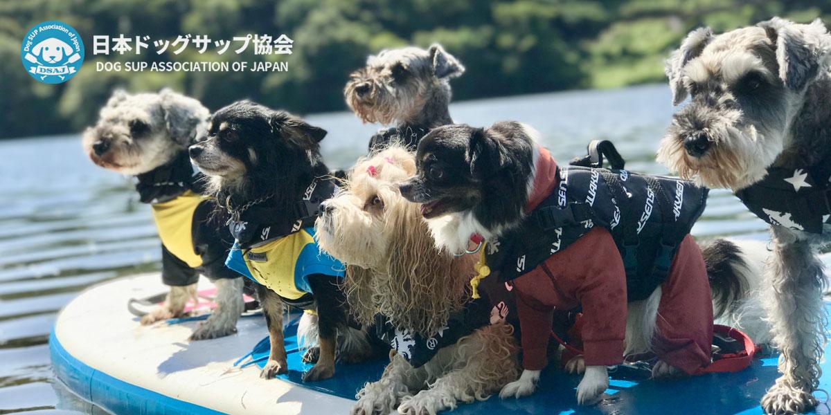 日本ドッグサップ協会代表校